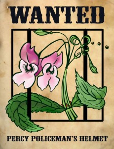 wanted_impatiens-med-624x807