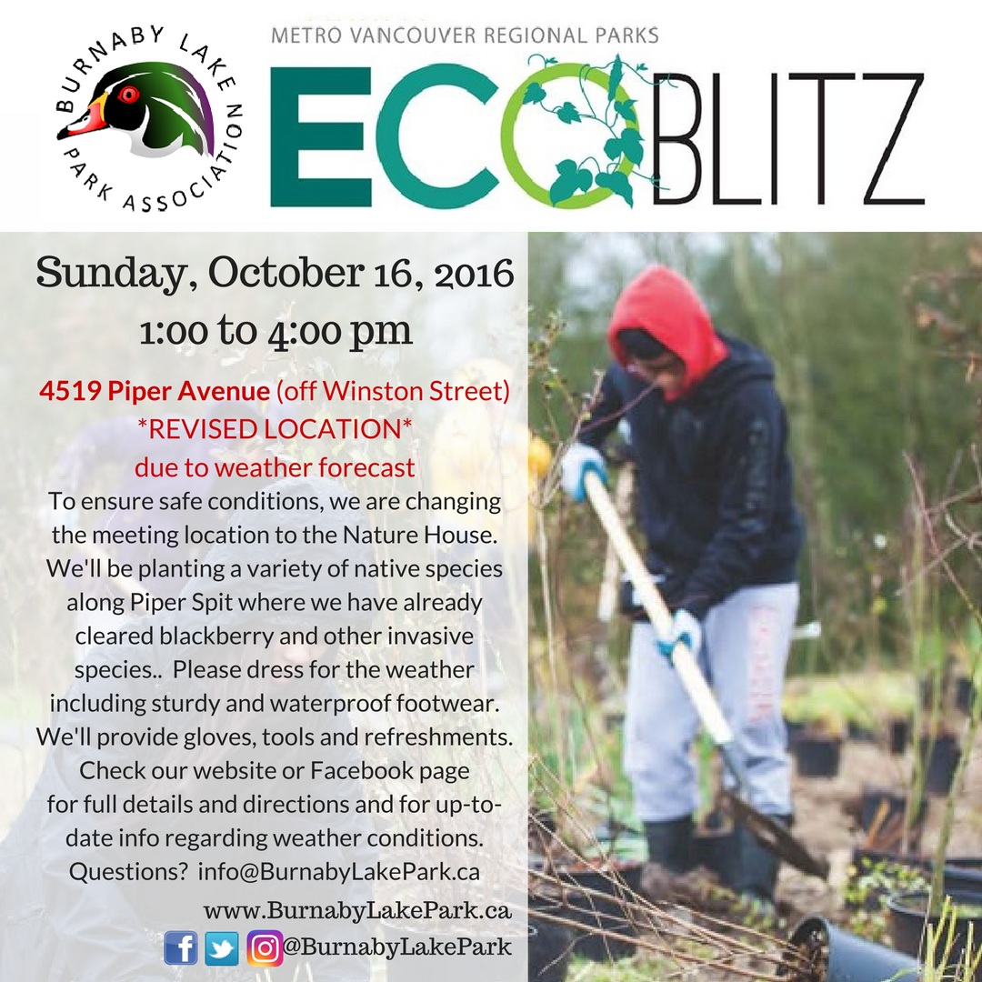 ecoblitz_ig-oct16-16_piperspit