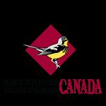 bird-studies