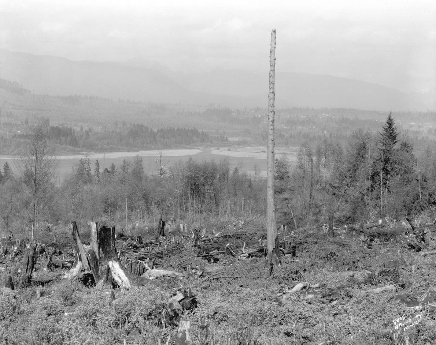 Clearing around Bunaby Lake - Source: City of Vancouver Archives & Burnaby Now